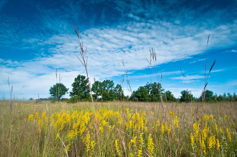 MNPR-11086: Goldenrod and Big Bluestem grasses