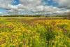 Goldenrod and Joe-pye Weed on the prairie