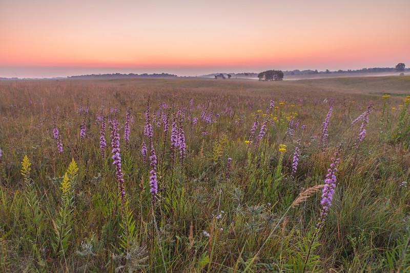 Twilight on a Oak-Savanna Prairie