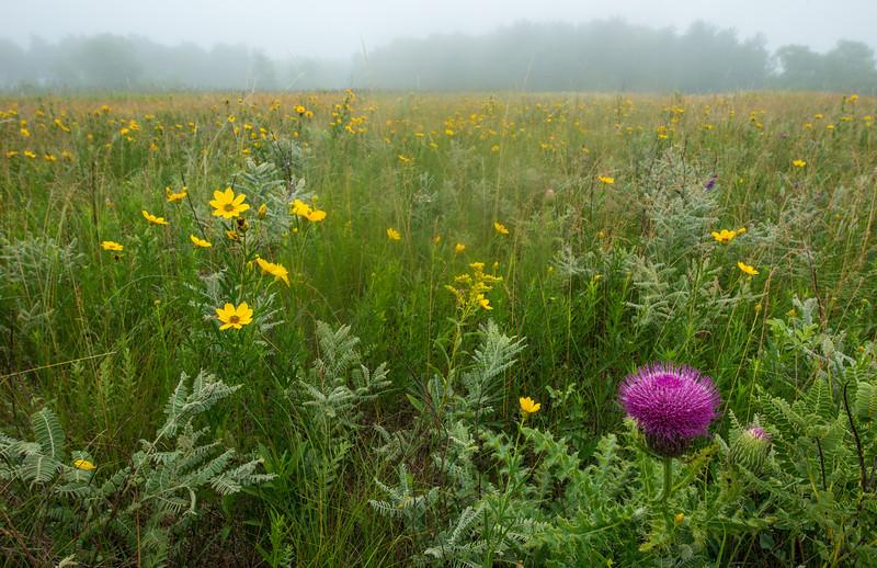 Prairie morning fog