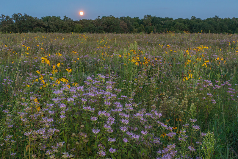 Full moon over the Savanna Prairie