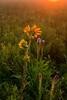 MNPR-10069: Prairie sunrise