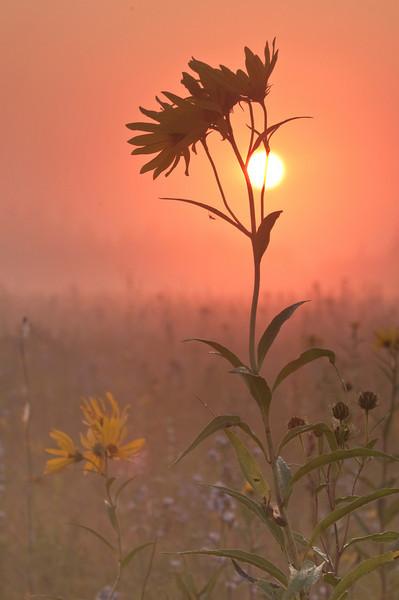 MNPR-9068: Misty sunrise on the prairie