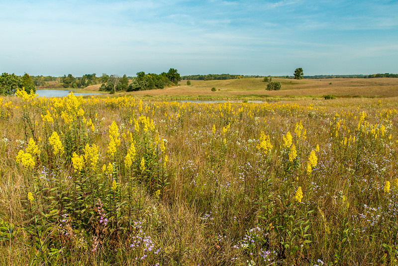 Oak-Savanna Prairie in September