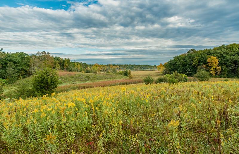 Carver Park prairie