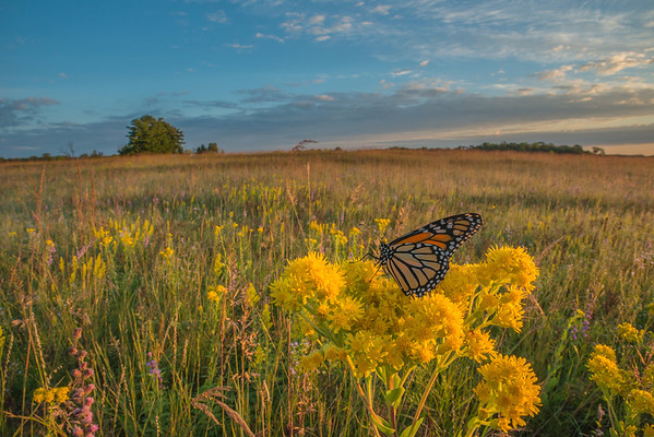 Monarch Environmental