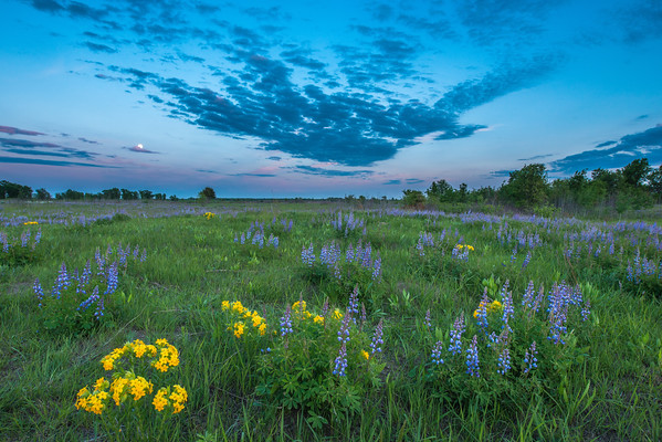 Twilight on the prairie