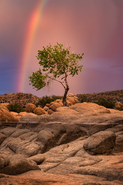 Rainbow and The Tree