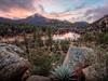 Granite Basin Cactus