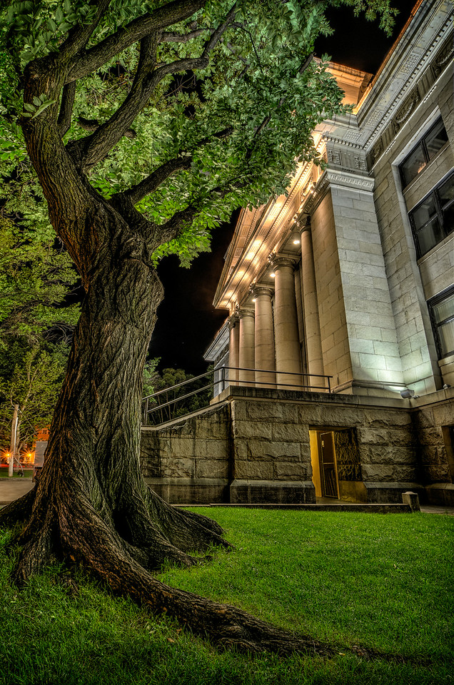 Courthouse Tree