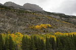 Fall colors Icefields Parkway