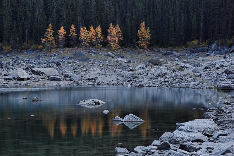 Tamarack at Dusk, Medicine Lake, Jasper National Park