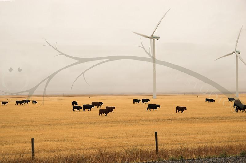 Mixed Farm, near Pincher Creek , Alberta.