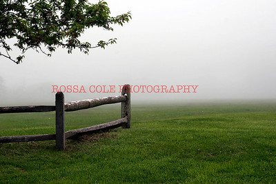 misty, field
