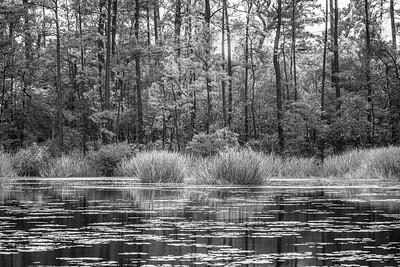 20210118-Spring Creek Trail-142-Edit