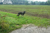 Gina in de polder
