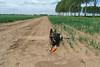 Gina in de polder