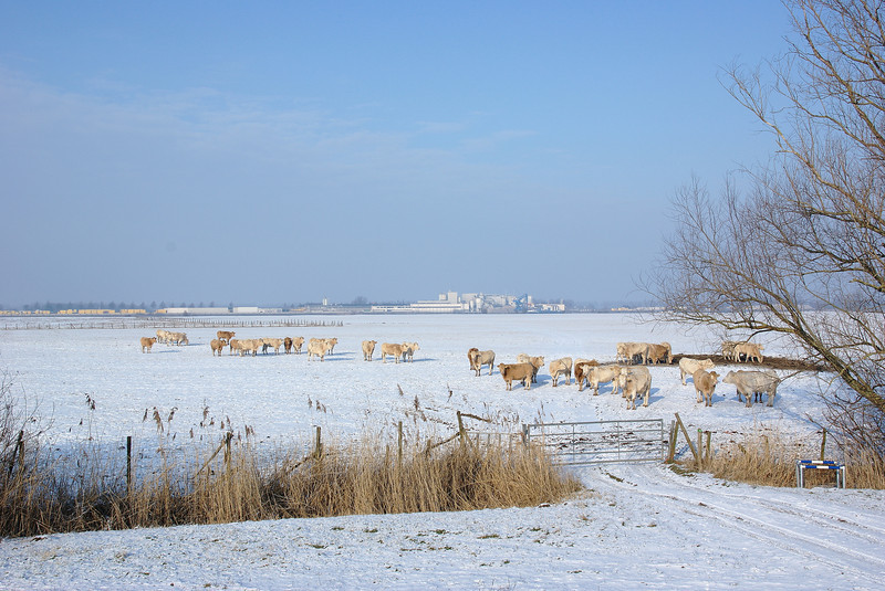 Winter in het Munnikenland
