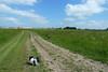 Munnikenlandse polder juni 2013. Het is nu nog groen