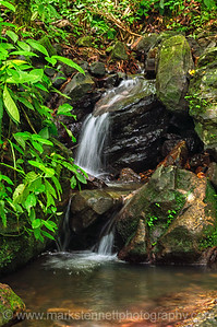 El Yunque National Rain Forest Puerto Rico