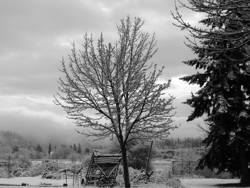 Quiet snows
