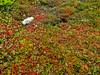 Bog Trail, Quoddy Head, Lubec ME 9/10