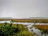 Orange River Marsh, Lubec ME 9/10