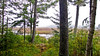Orange River Marsh, Lubec ME 9/10