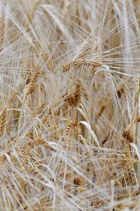 Lindeijer_2012-09-10_181645_01