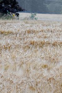 Lindeijer_2012-09-10_181552