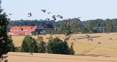 Lindeijer_2012-08-27_181940