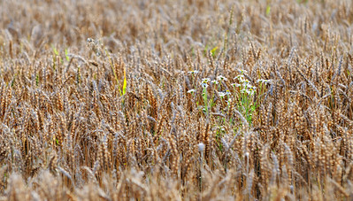 Lindeijer_2012-08-27_183631