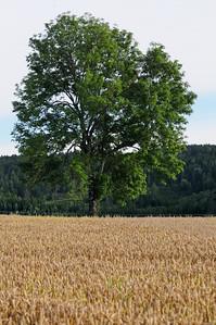 Lindeijer_2012-08-27_184007