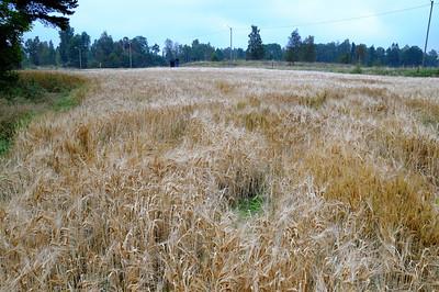 Lindeijer_2012-09-10_182251
