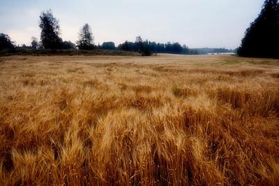 Lindeijer_2012-09-10_185145_02