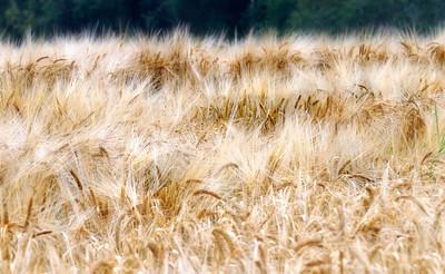 Lindeijer_2012-09-10_181804