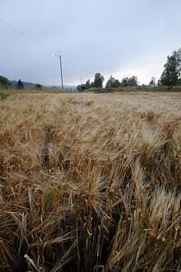 Lindeijer_2012-09-10_185326