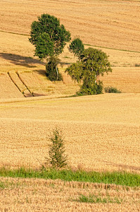 Lindeijer_2012-08-27_182656