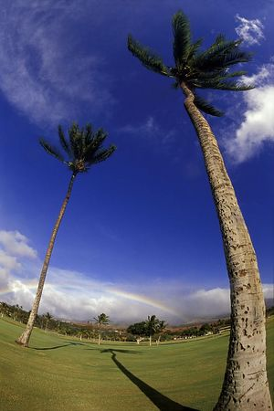 rainbow and palm trees, Ka'anapali, Maui, Hawaii<br /> ( Central Pacific Ocean )<br /> 1