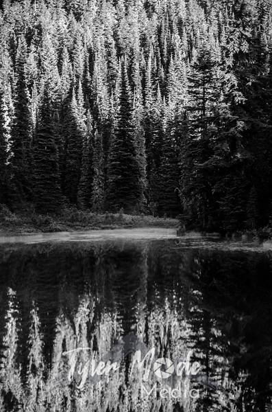 3501  G Morning Reflections Trees Sharp BW V