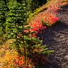 2279  G Fall Color Along Trail V