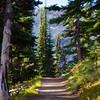 2254  G Trail Sun V