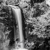 3549  G Christine Falls Sharp BW
