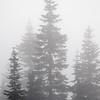 84  G Fog and Tree V