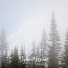 87  G Rainier With Fog