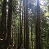 146  G Forest Sun V