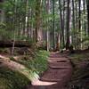 131  G Trail Up V