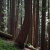 137  G Trail V