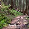 135  G Trail Down Sun
