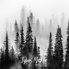 44  G Foggy Trees BW